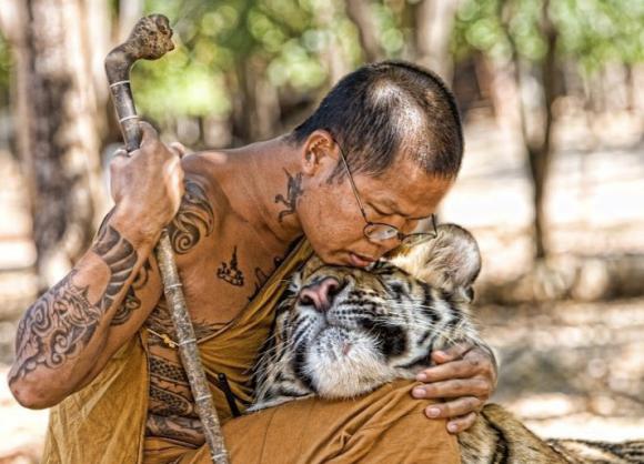 Monk-tiger